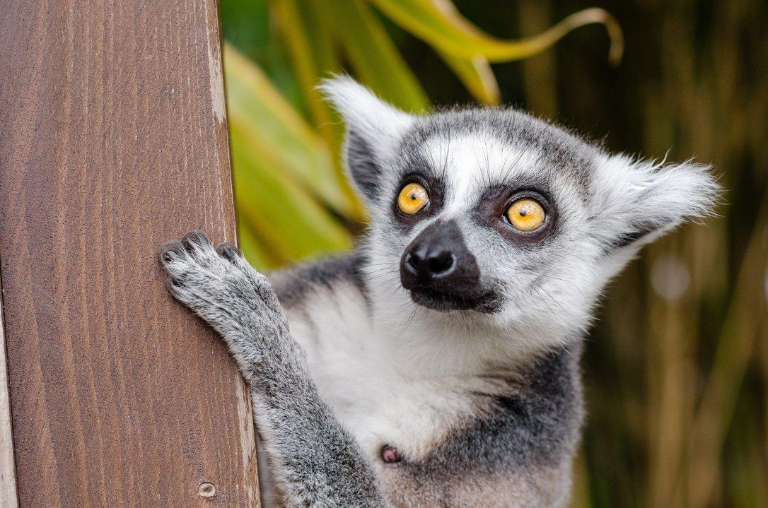 animal-eyes-fur-33149 (1)